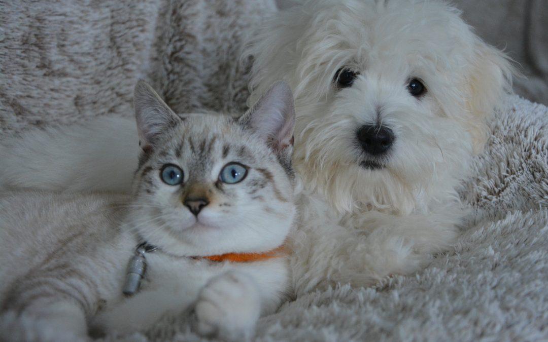 Kissa Aivastelee