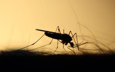 Sähköiset hyttyskarkottimet lemmikkiperheessä