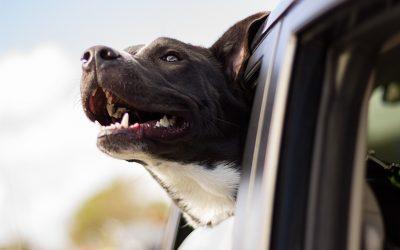 Koiran matkapahoinvointi