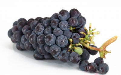 Viinirypäleet ja rusinat voivat johtaa munuaisvaurioon